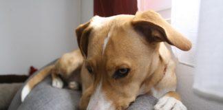 Problemy z oczami u psów