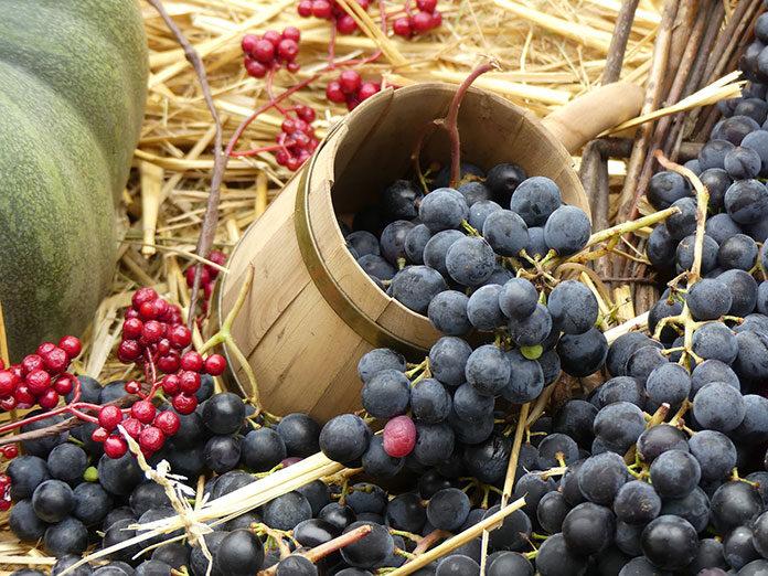 Wina – jak określić ich jakość
